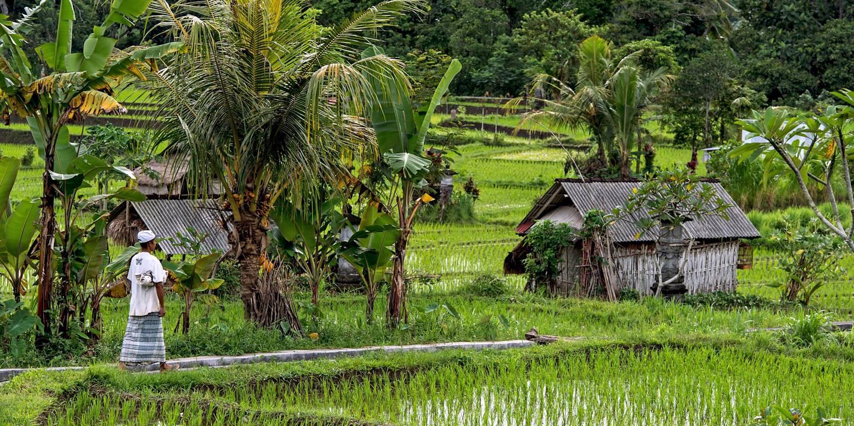 Rizières à Siedemen - Bali - Indonésie