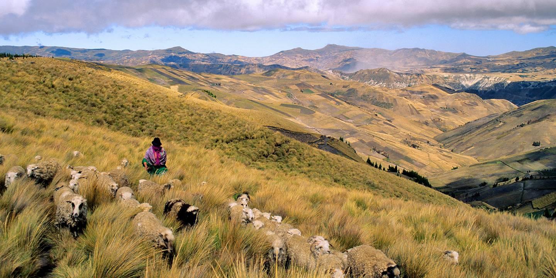 Bergère dans la vallée de Zumbahua - province du Cotopaxi - Équateur