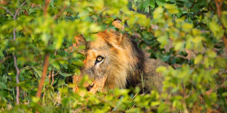 Rencontre dans le parc Kruger - Afrique du Sud