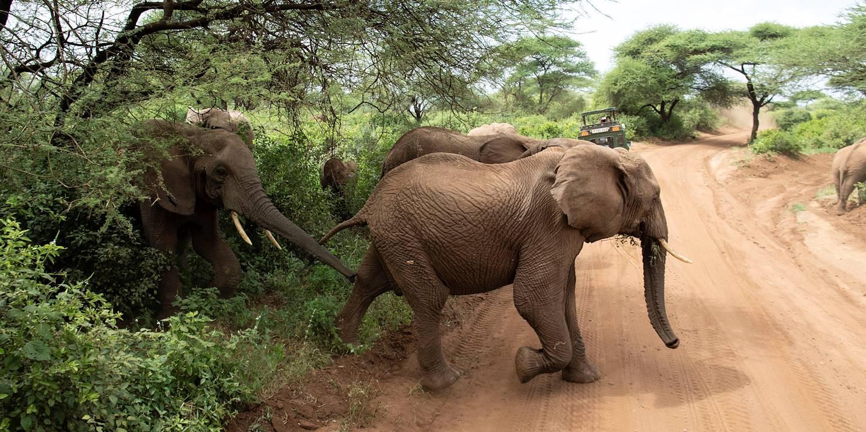 À la découverte du Parc National du Lac Manyara - Parc du Lac Manyara - Nord - Tanzanie