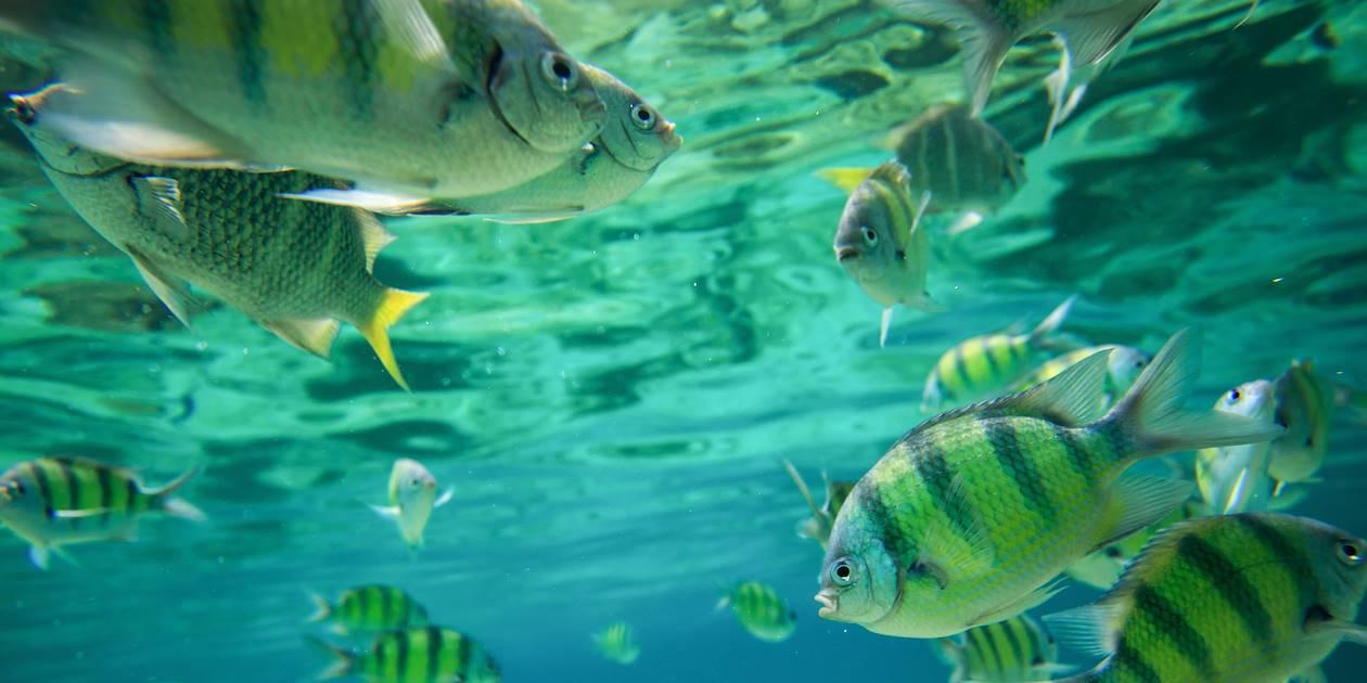 Snorkeling - Cuba