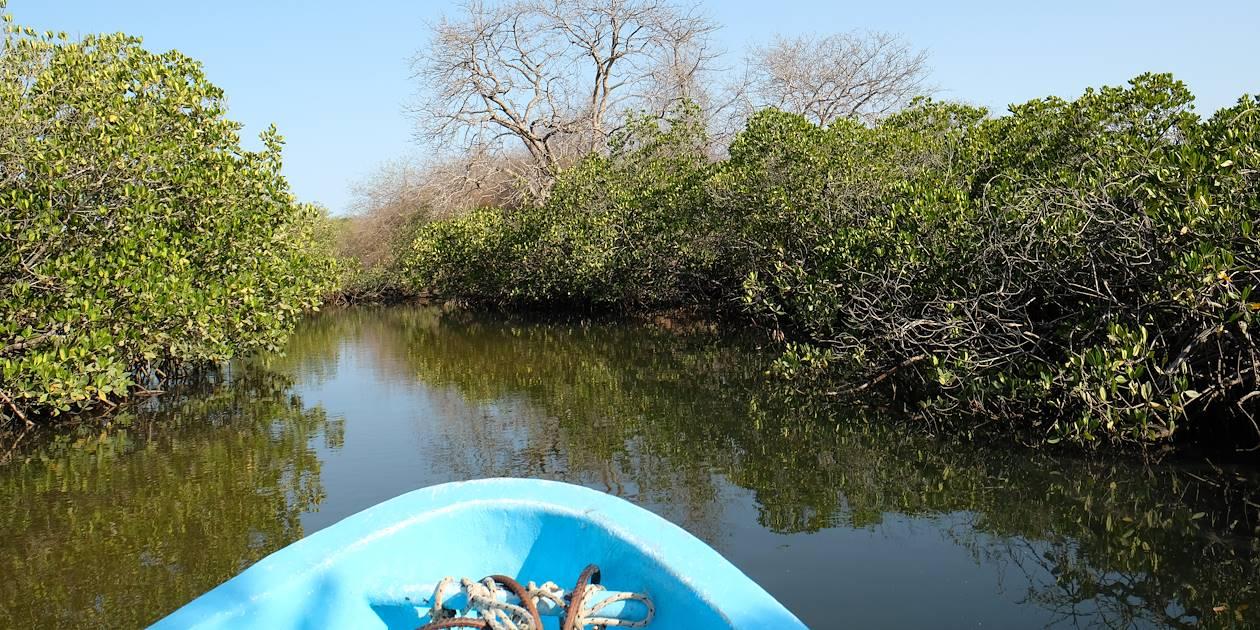 Découverte de la mangrove à travers les bolongs - Sine Saloum - Sénégal