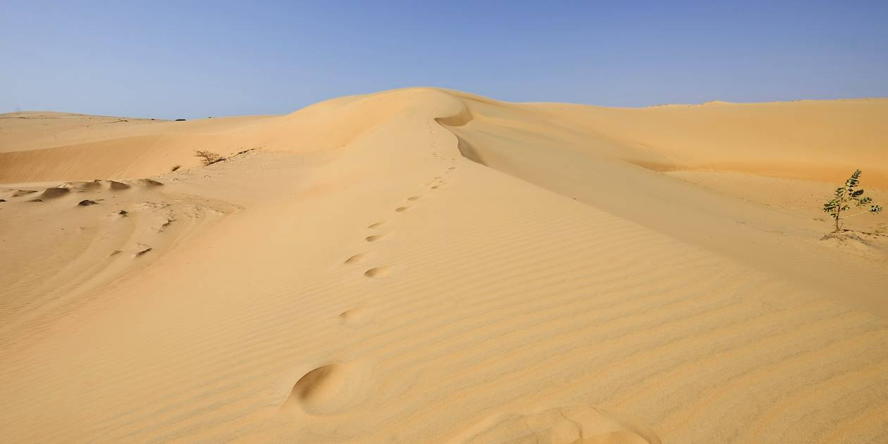 Le désert de Lompoul - Région de Louga - Sénégal