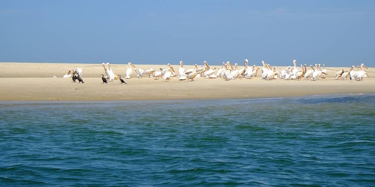 Ile aux oiseaux - Delta du Saloum - Sénégal