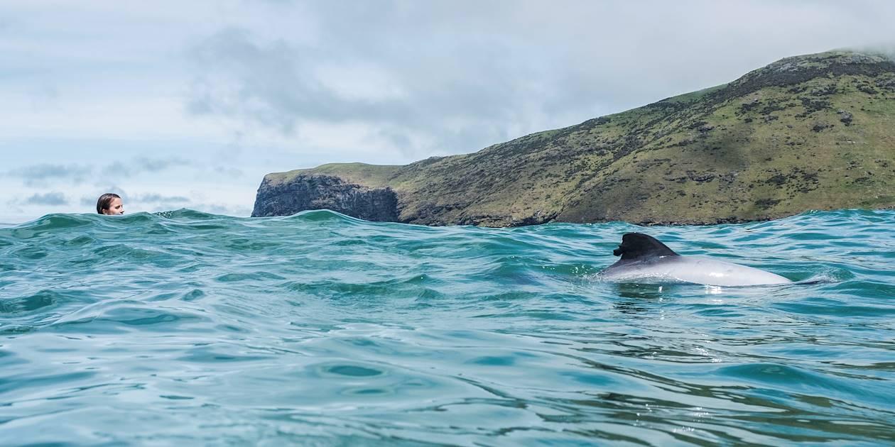 Nage avec les dauphins Hector - Akaroa - Île du Sud - Nouvelle Zélande