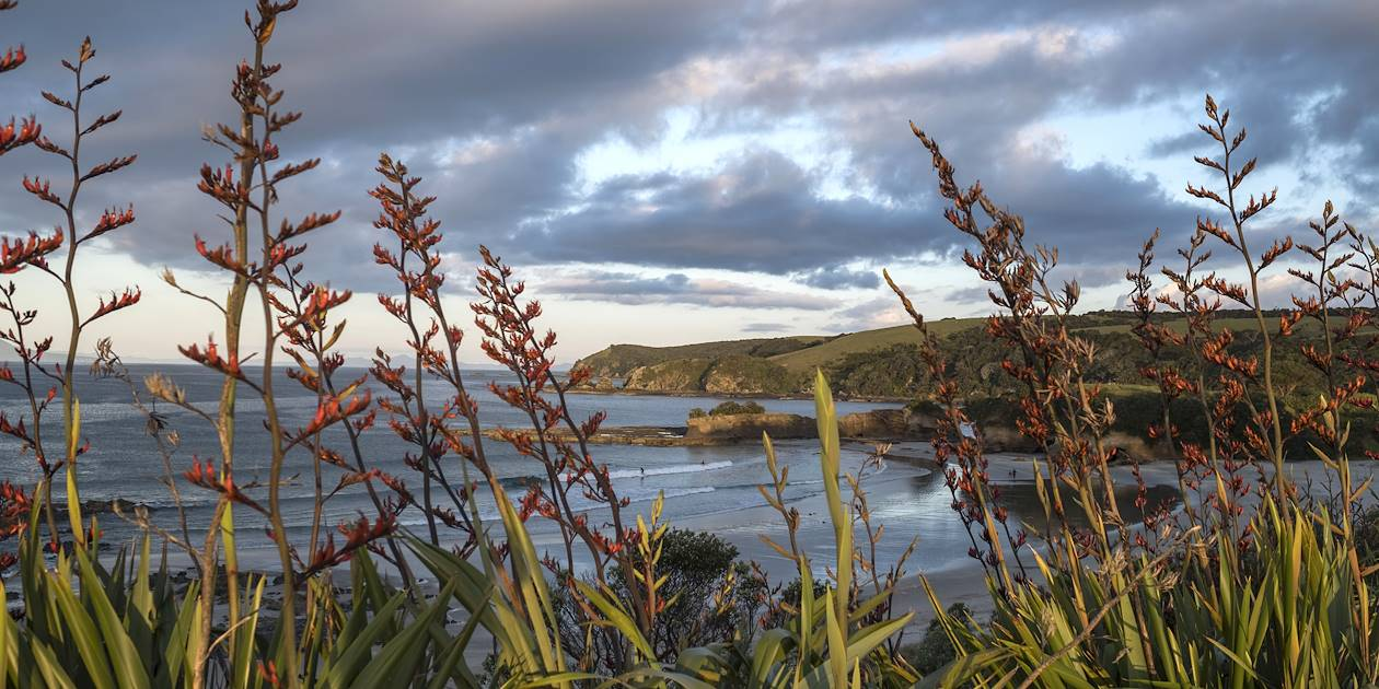 Péninsule de Tawharanui - Île du Nord - Nouvelle Zélande