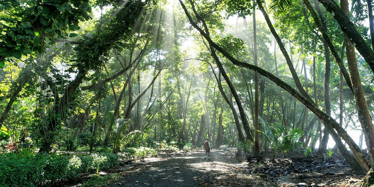Randonnée dans la forêt tropicale du Parc National de Corcovado - Péninsule d'Osa - Costa Rica