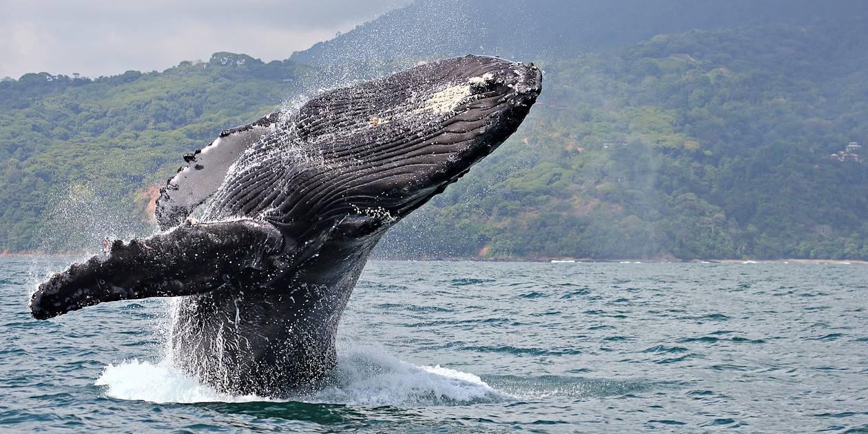 Observation des baleines - Parc National Marino Ballena - Costa Rica