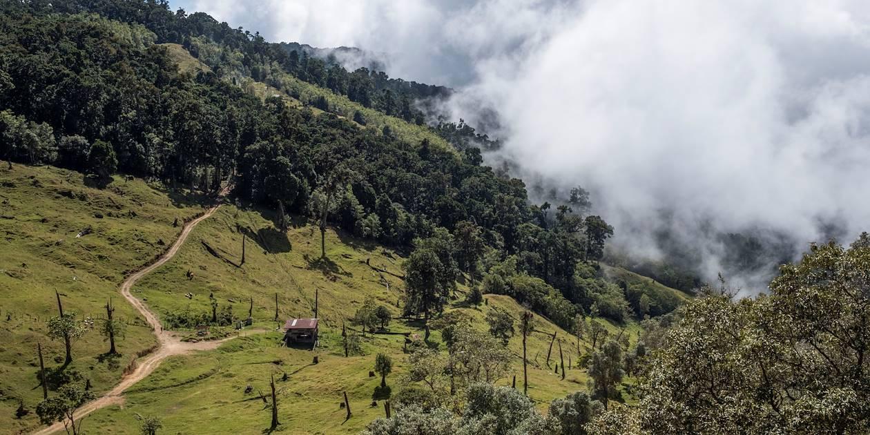 Forêt de nuages - San Gerardo de Dota - Parc National Los Quetzales - Costa Rica