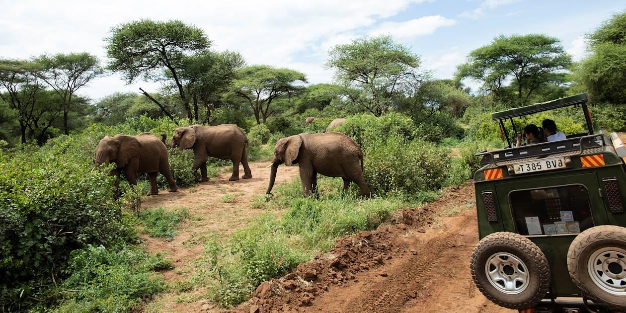 Découverte de la réserve de Hluhluwe-Umfolozi en 4x4 - KwaZulu-Natal - Afrique du Sud