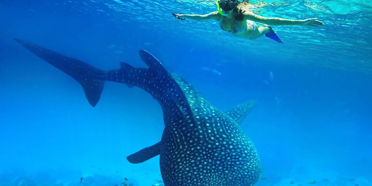 Snorkeling aux cotés d'un requin-baleine - Seychelles