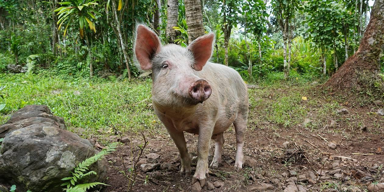 Randonnée à Rimatara - Archipel des Australes - Polynésie