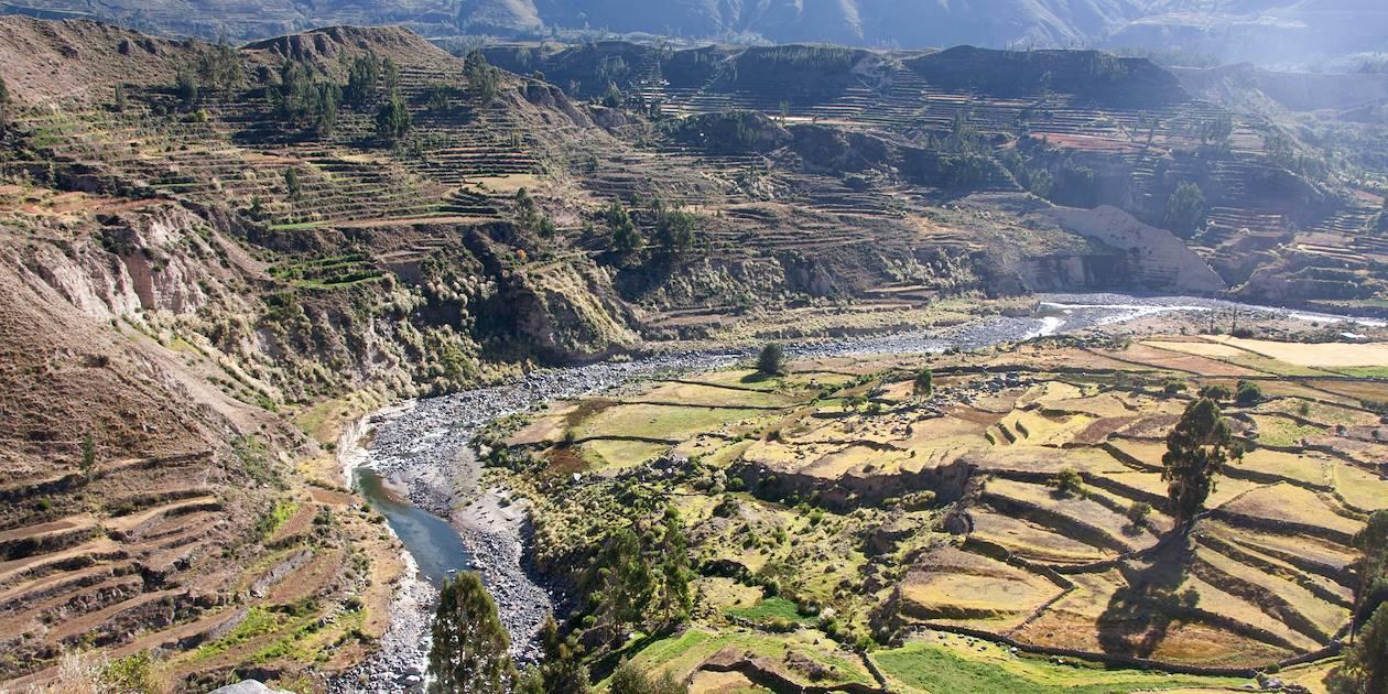 Canyon de Colca - Province d'Arequipa - Pérou