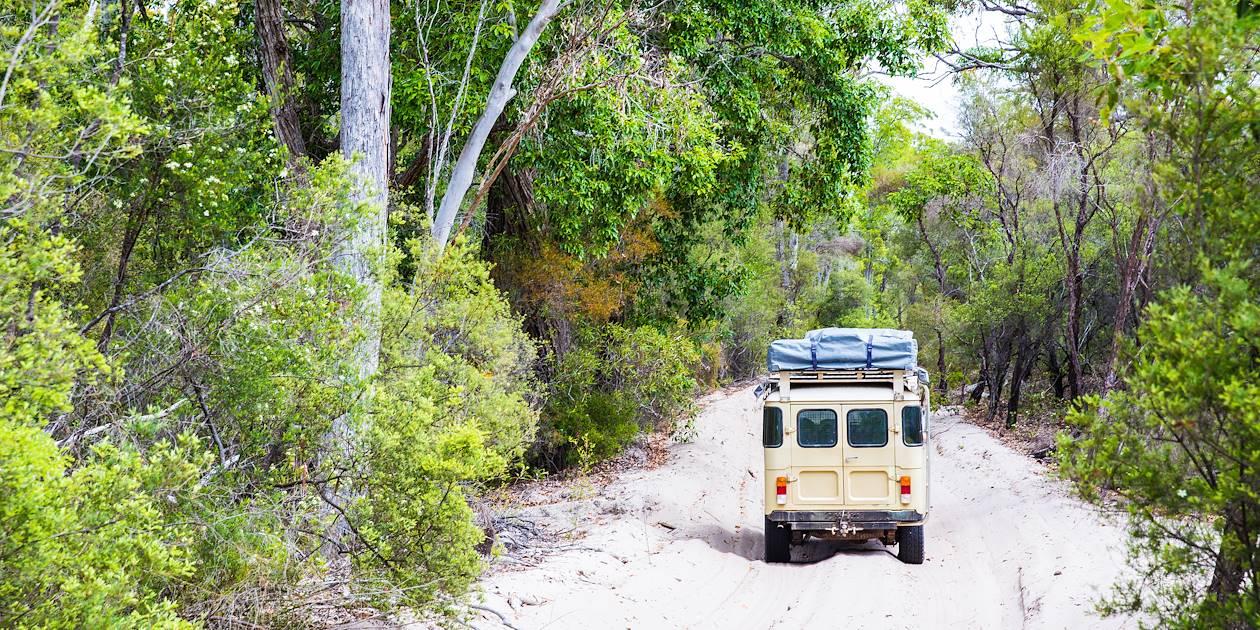 Jeep traversant la forêt Satinay - Fraser Island - Queensland - Australie