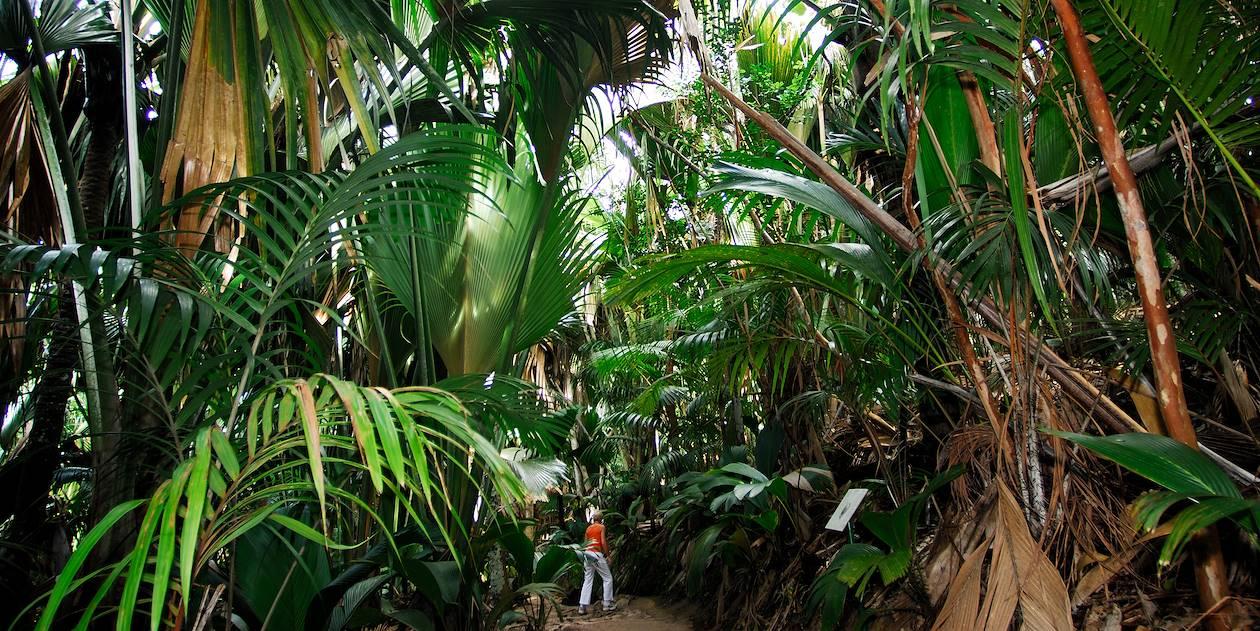 Vallée de Mai - Praslin - Seychelles