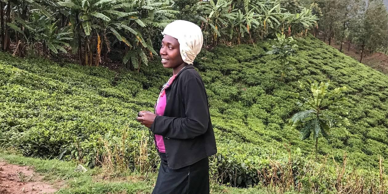 Plantations de thé - Ouganda