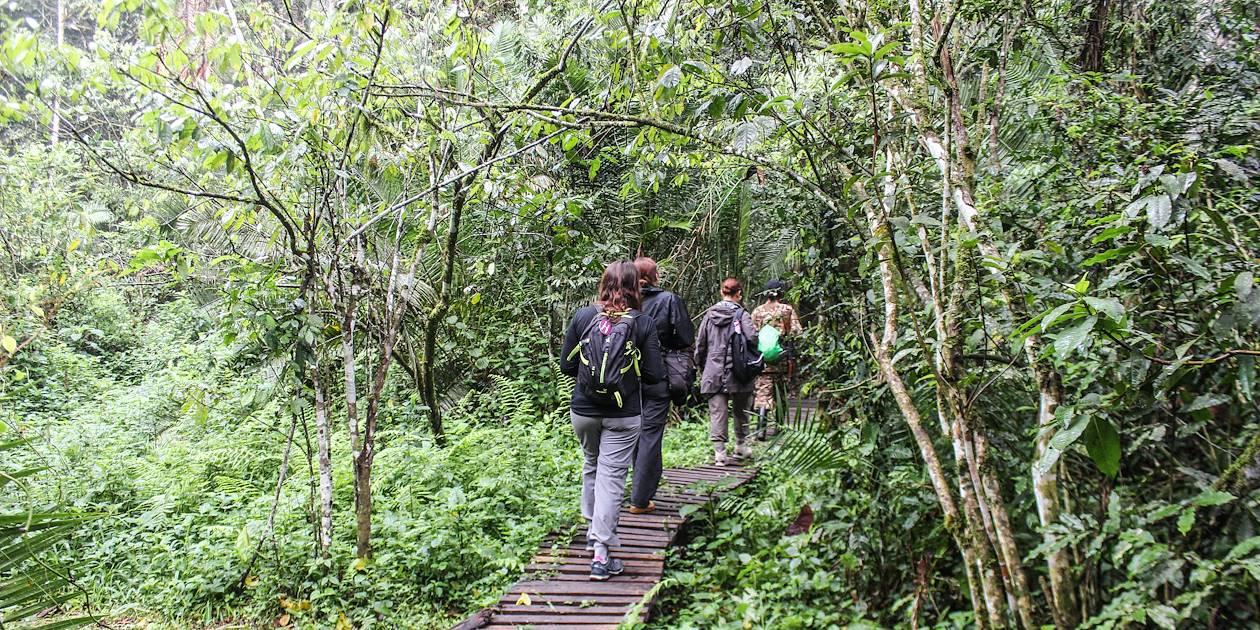 Promenade dans le parc national de Kibale - Ouganda