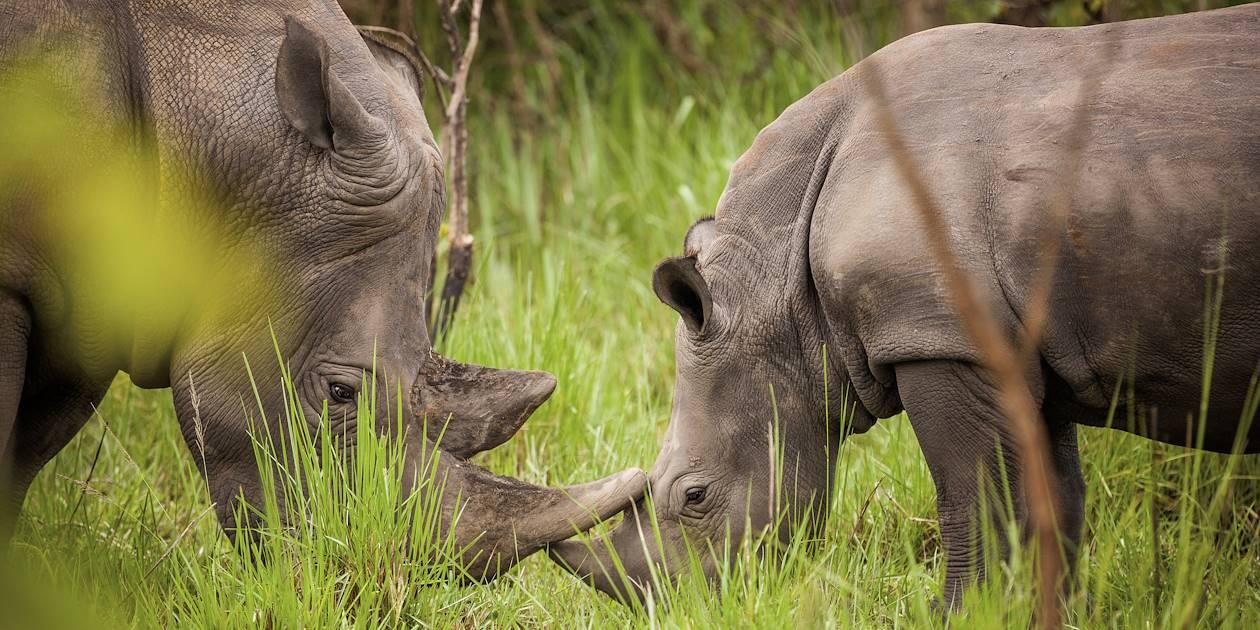 Le Sanctuaire des Rhinocéros de Ziwa - Ouganda