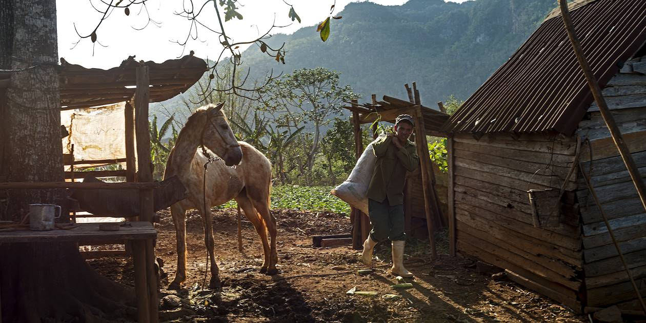 Agriculteur dans la Vallée de Vinales - Cuba