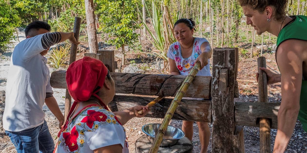 Découverte du Centre Ecoturisme Kiichpam K'aax : élevage d'abeilles mélipones - Chunhuhub - Quintana Roo - Yucatan - Mexique