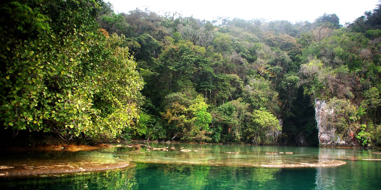 Forêt tropicale - Chiapas - Mexique