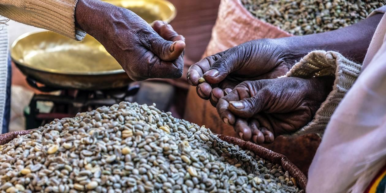 Grains de café - Éthiopie