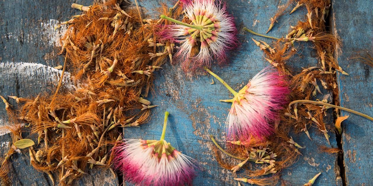 Fleurs - Negombo - Ouest - Sri Lanka