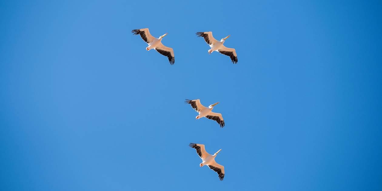Sandwich Harbour - Parc du Namib - Walvis Bay - La Cote - Namibie