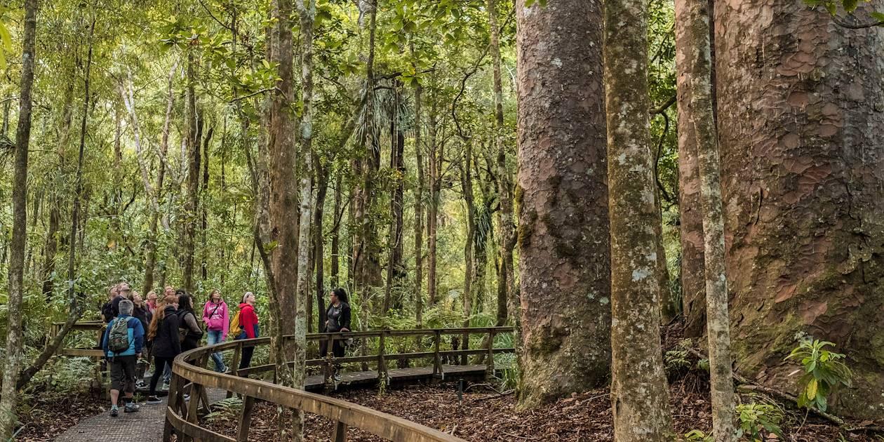 Découverte de la forêt de Waipoua - Île du Nord - Nouvelle Zélande