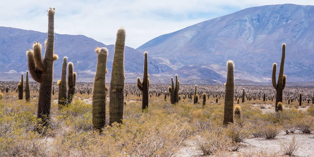 Parc national Los Cardones - Province de Salta - Argentine