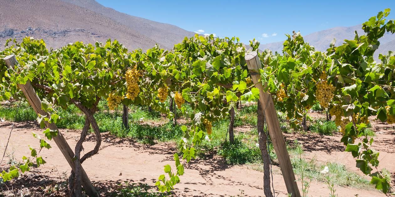 Vignoble de la vallée de l'Elqui - province d'Elqui - Chili
