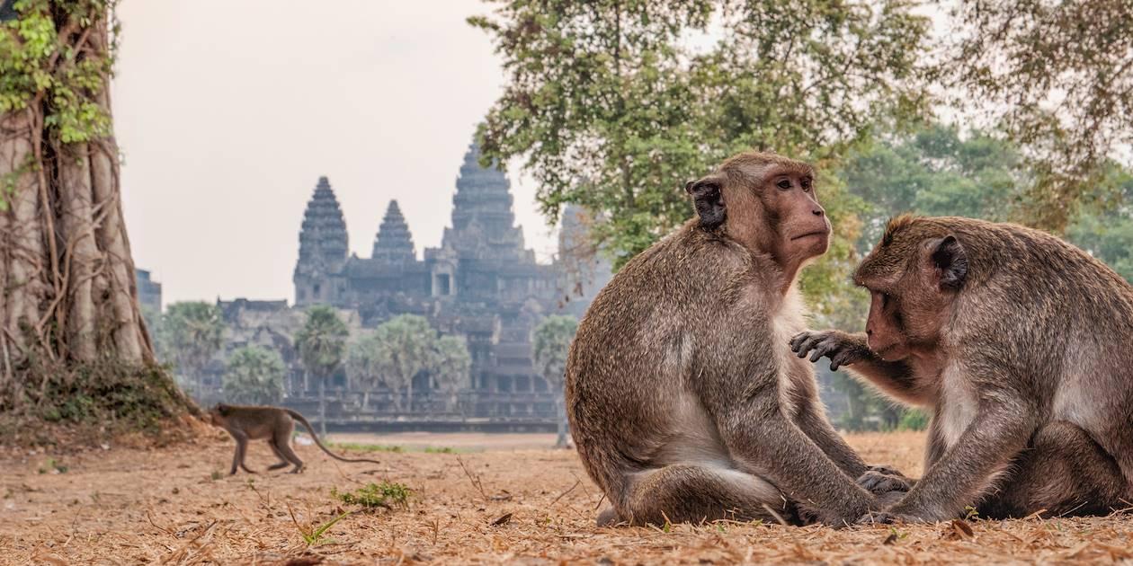 Singes devant le temple Angkor Wat - Siem Reap - Cambodge