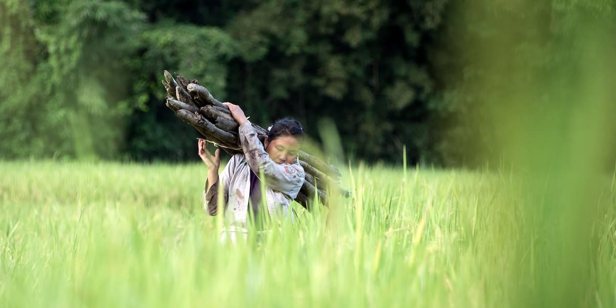 Dans les rizières Muang Ngoï - Province de Luang Prabang - Laos