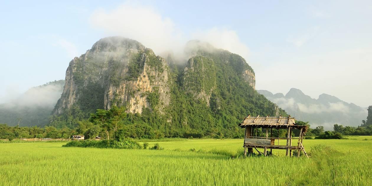 Rizière - Laos