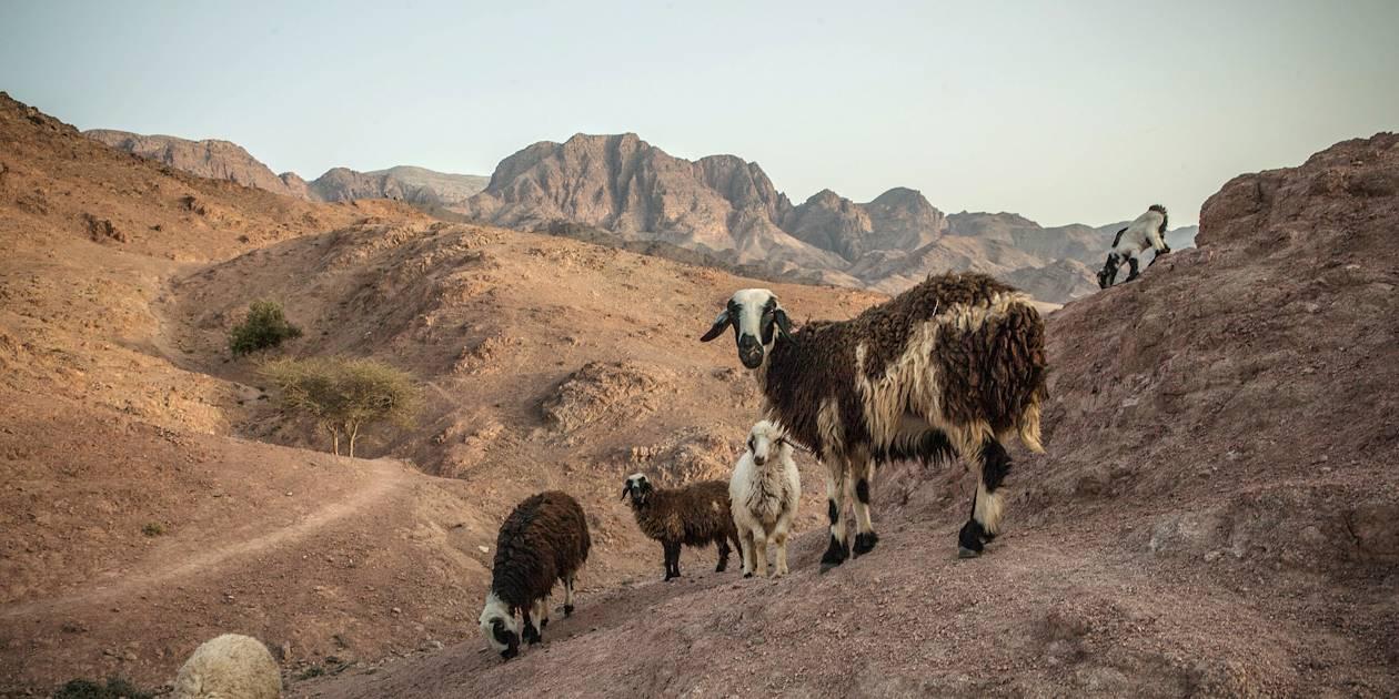 Découverte du Wadi Feynan, véritable paysage désertique - Feynan - Jordanie