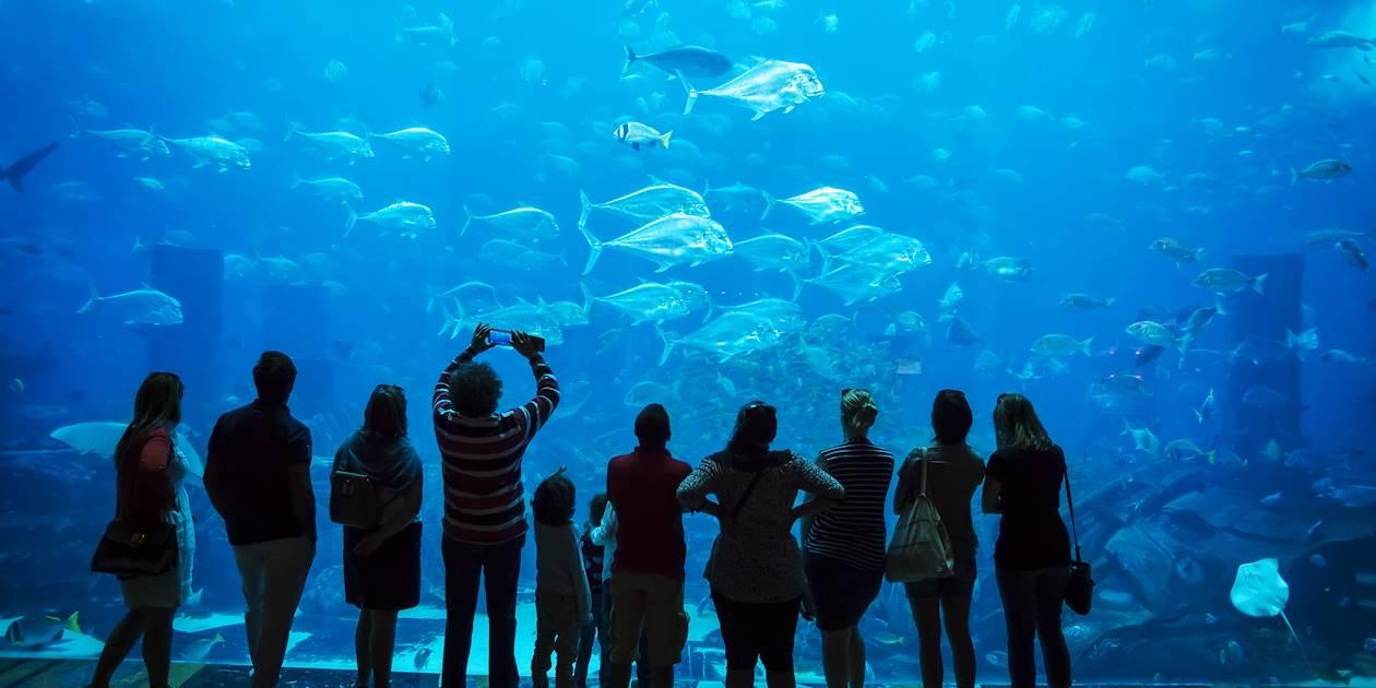 Aquarium de Dubaï - Emirats Arabes Unis