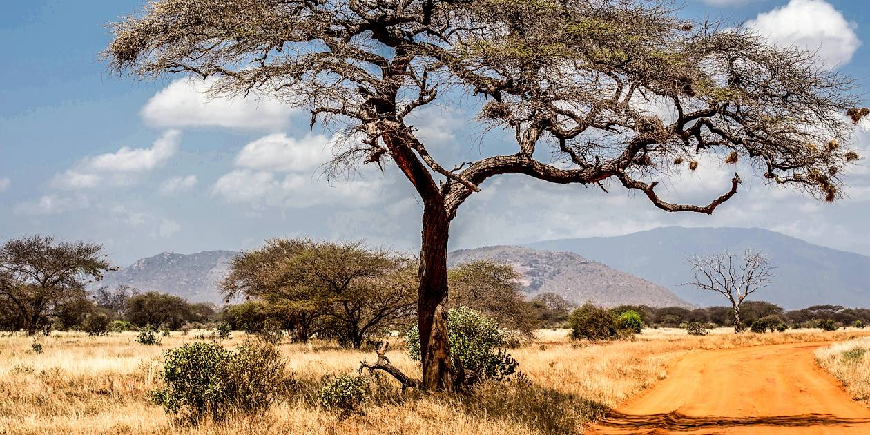 Parc national de Tsavo - Province de la côte - Kenya