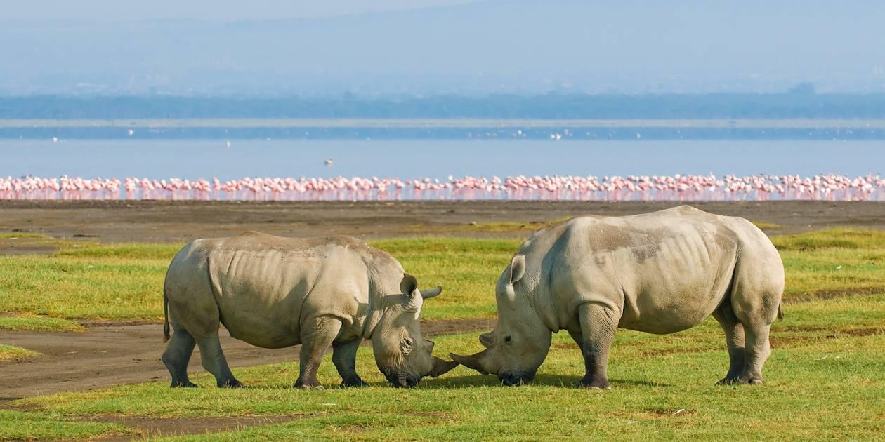 Rhinocéros - Lac Nakuru - Kenya