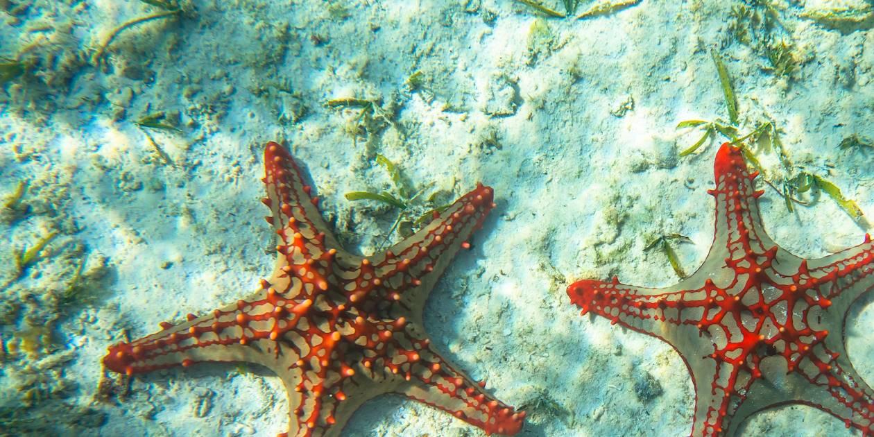 Étoiles de mer colorées - Chumbe Island - Tanzanie