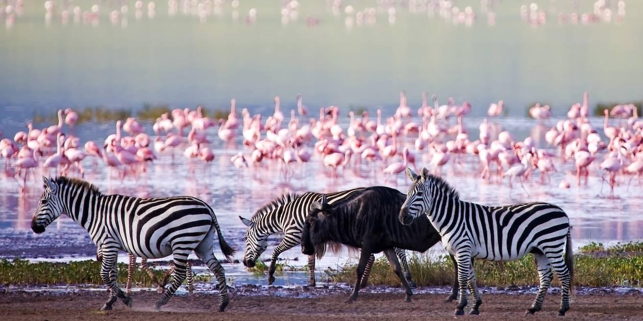 Faune en Tanzanie