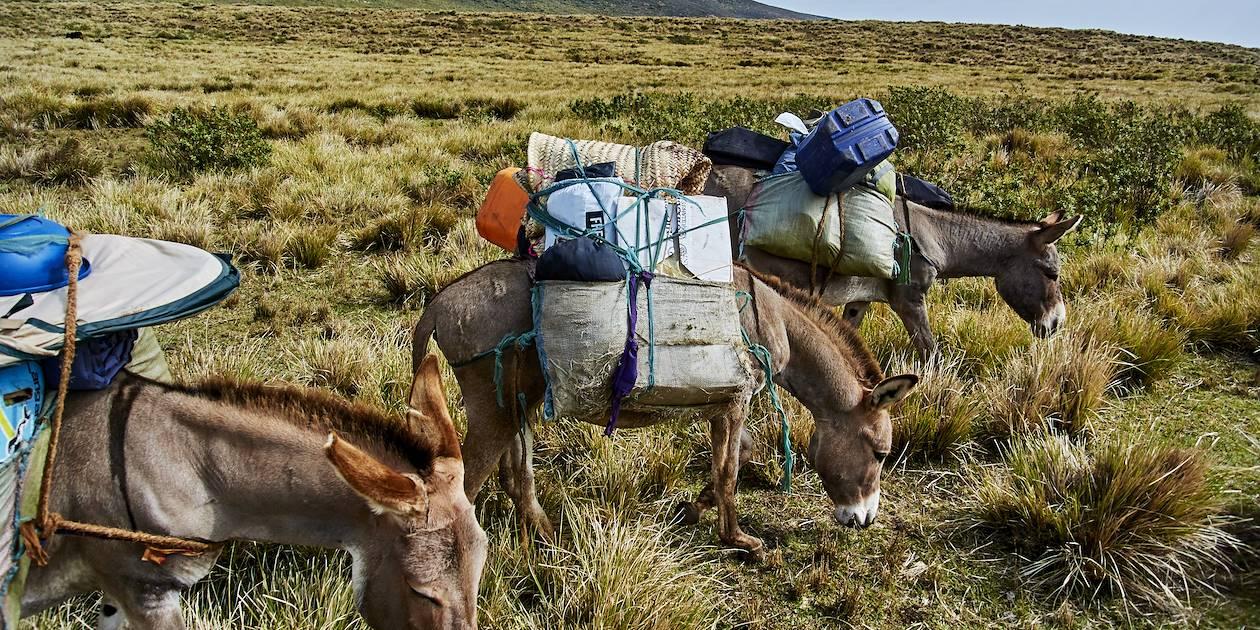 Randonnée dans l'aire de conversation du Ngorongoro - Tanzanie