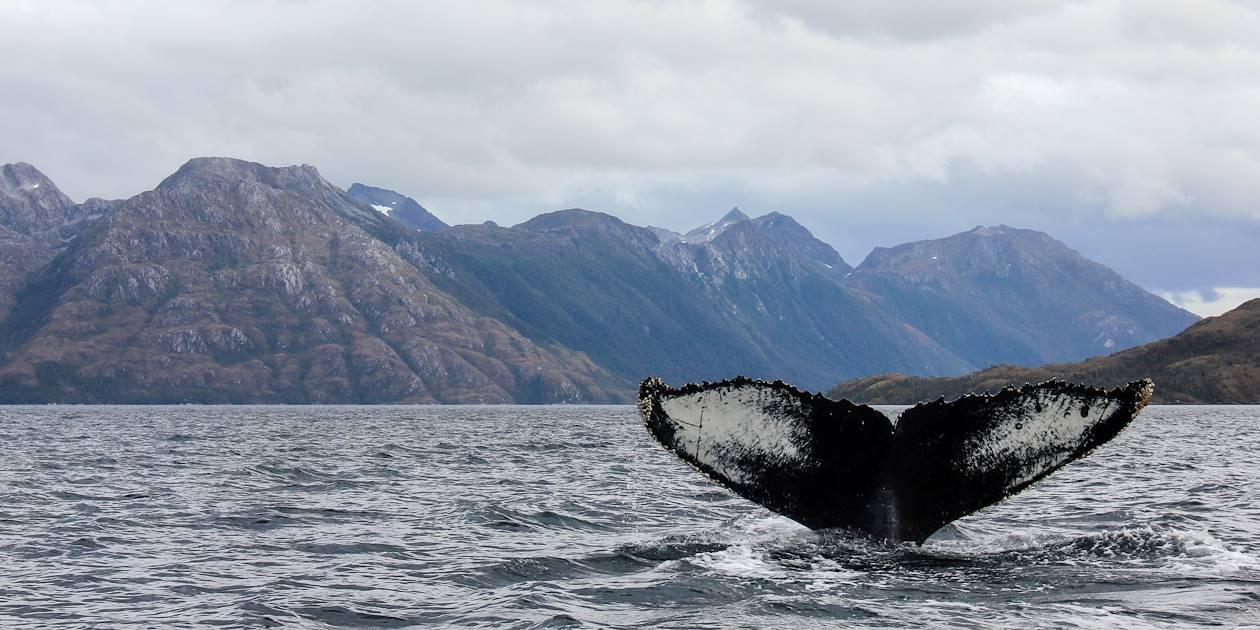 Baleine - Norvège