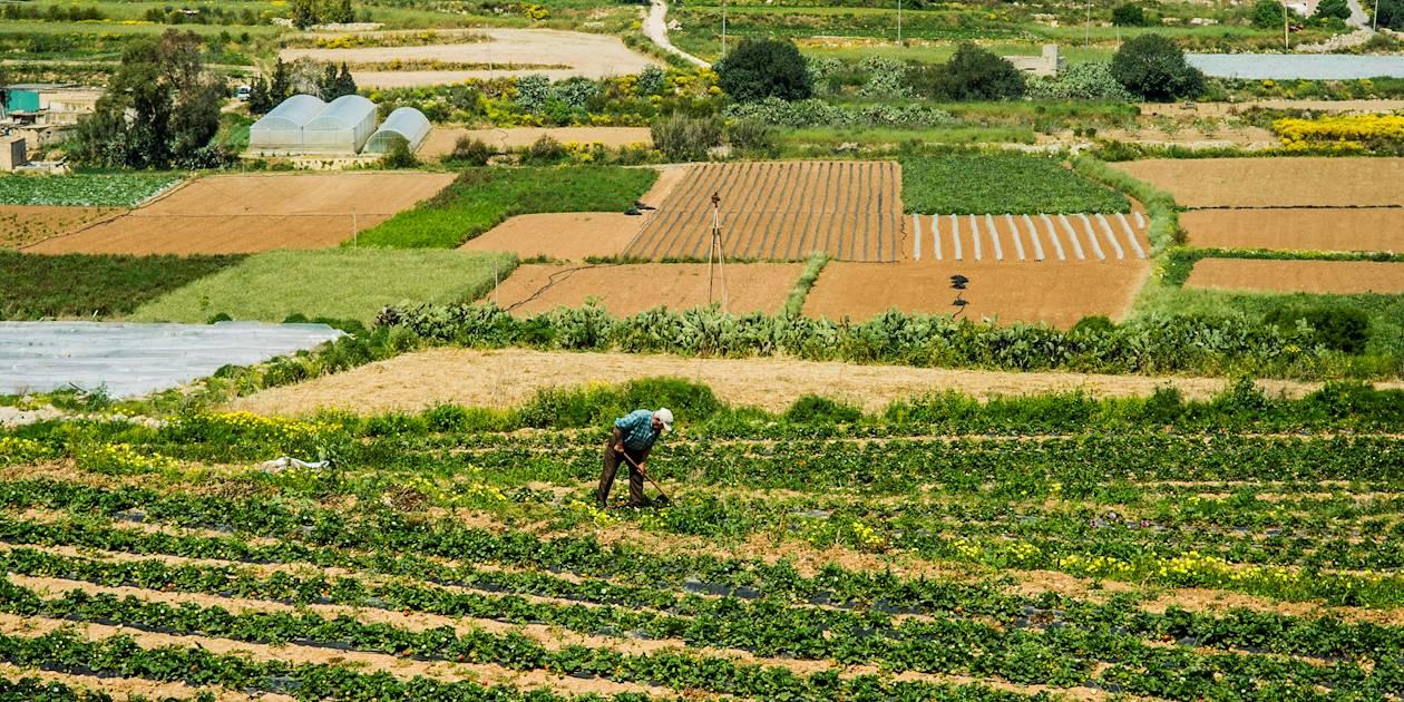 Agriculteur dans la campagne maltaise - Malte