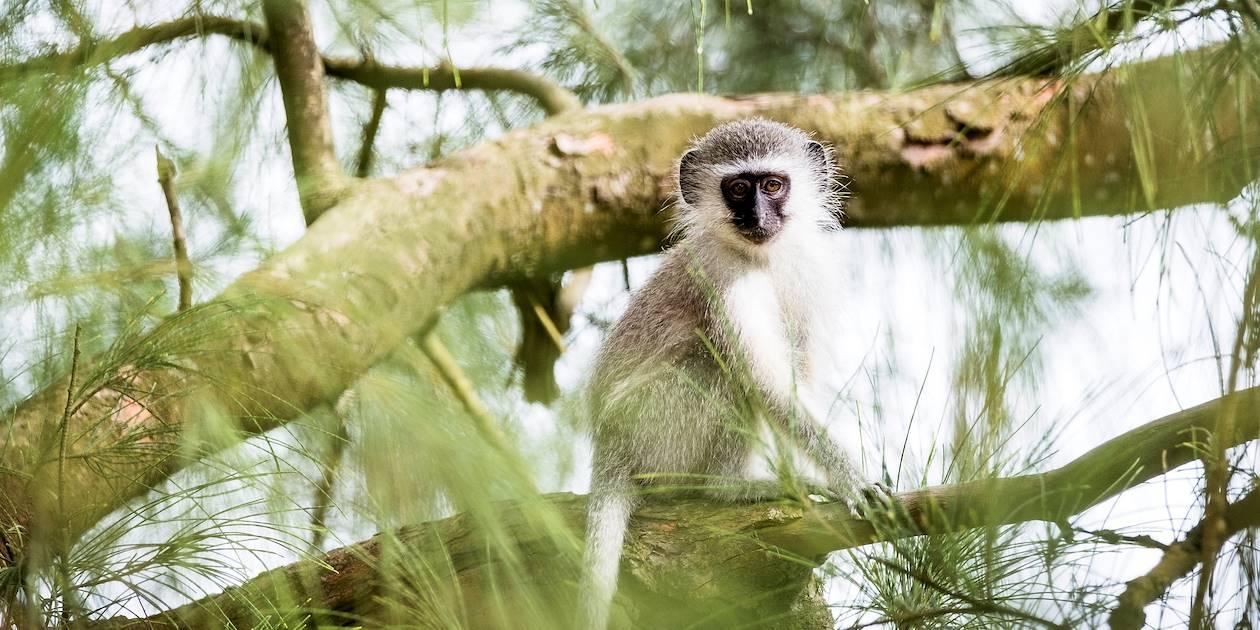 Découverte de la faune de l'estuaire de Santa Lucia - Santa Lucia - KwaZulu-Natal - Afrique du Sud