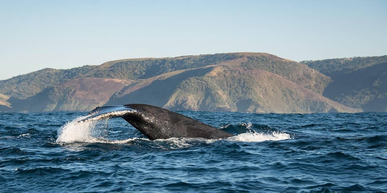 Baleine près des côtes de l'Afrique du Sud
