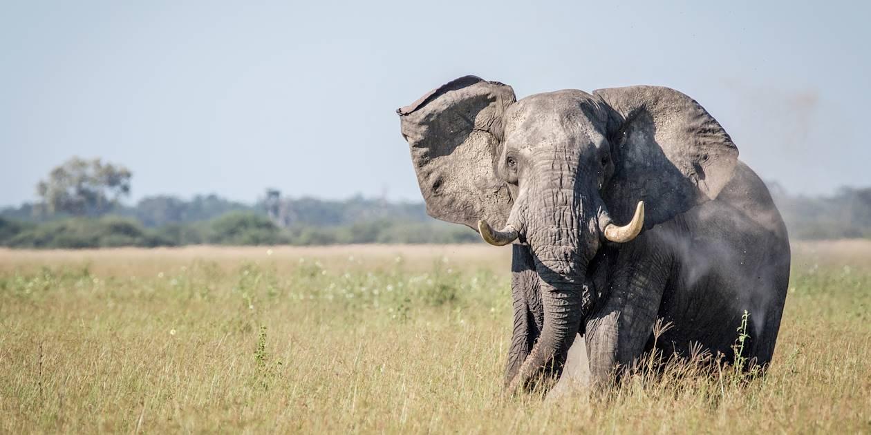 Éléphant dans la réserve naturelle d'Addo Elephant - Afrique du Sud