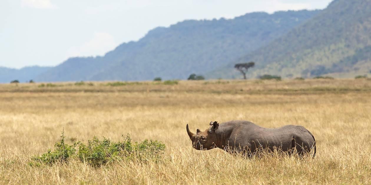 Rhinocéros dans la réserve privée de Sabi Sand - Parc Kruger - Afrique du Sud