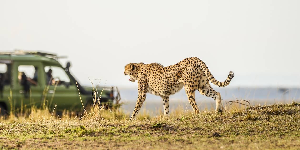 Safari en 4x4 dans le Parc national Kruger - Afrique du Sud