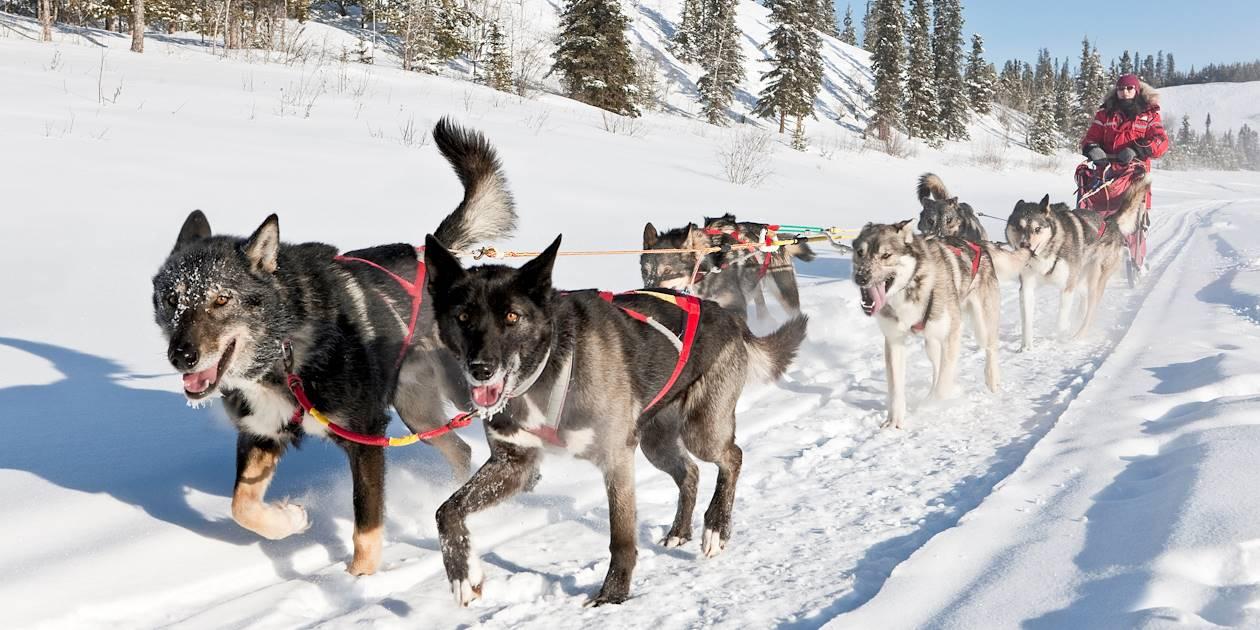 Traineau à chiens - Whitehorse - Yukon - Canada