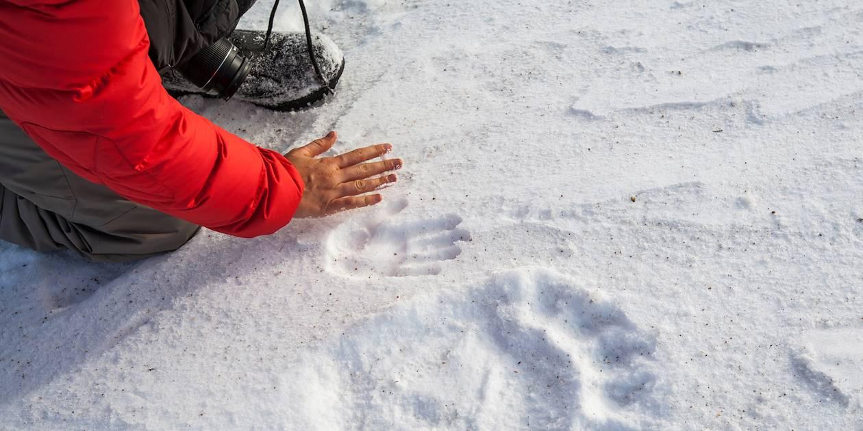 Observation de la faune - Baie d'Hudson - Nunavut - Canada